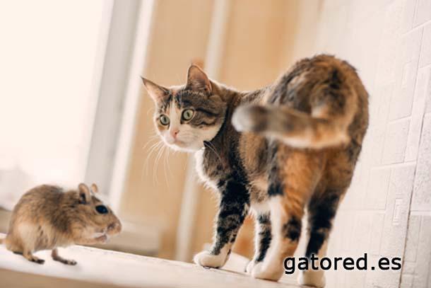 GatoRed | Síndrome gato paracaidista
