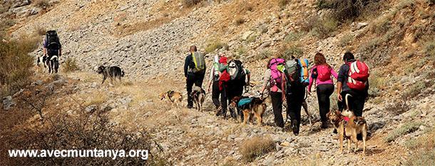 AVEC | Excursionismo y actividades deportivas con perros