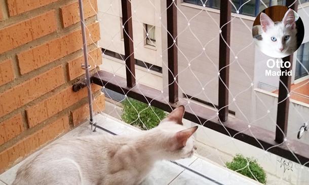 Mallas seguridad Gatos