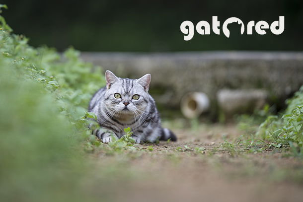 Redes de protección para gatos | GatoRed